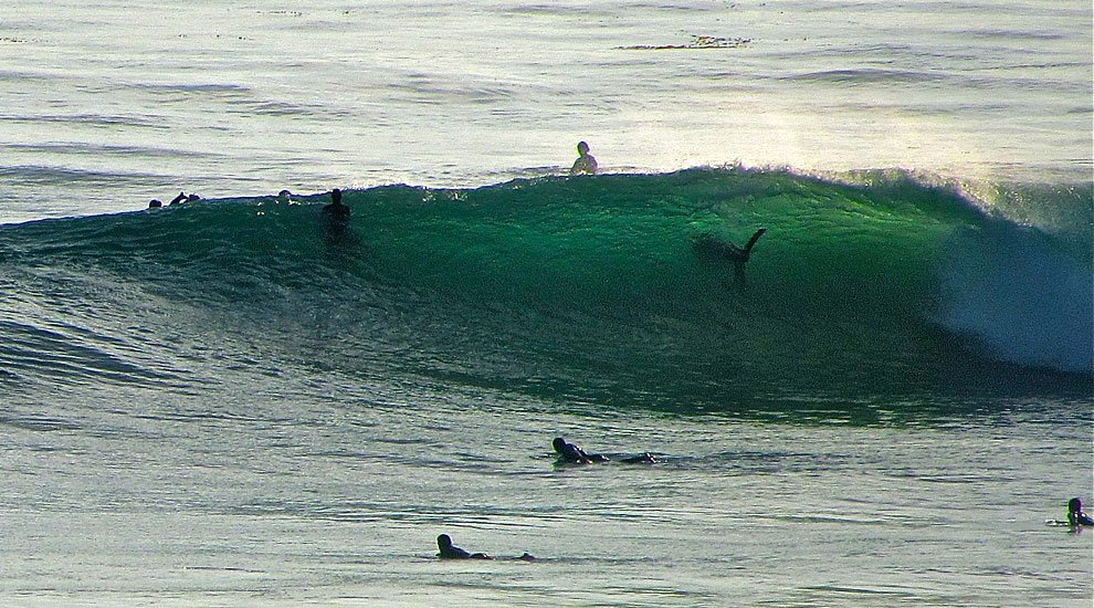 Surf With Sharks